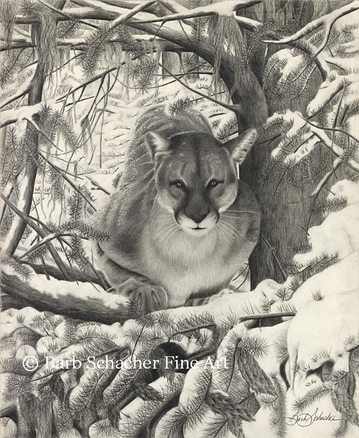 707x864 Mountain Lion Pencil Drawing Print