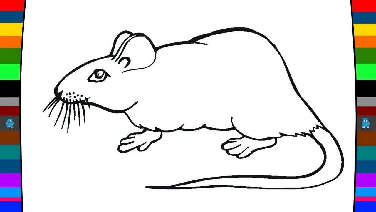 1280x720 Animal Coloring Pages How To Draw A Mouse Drawing And Coloring
