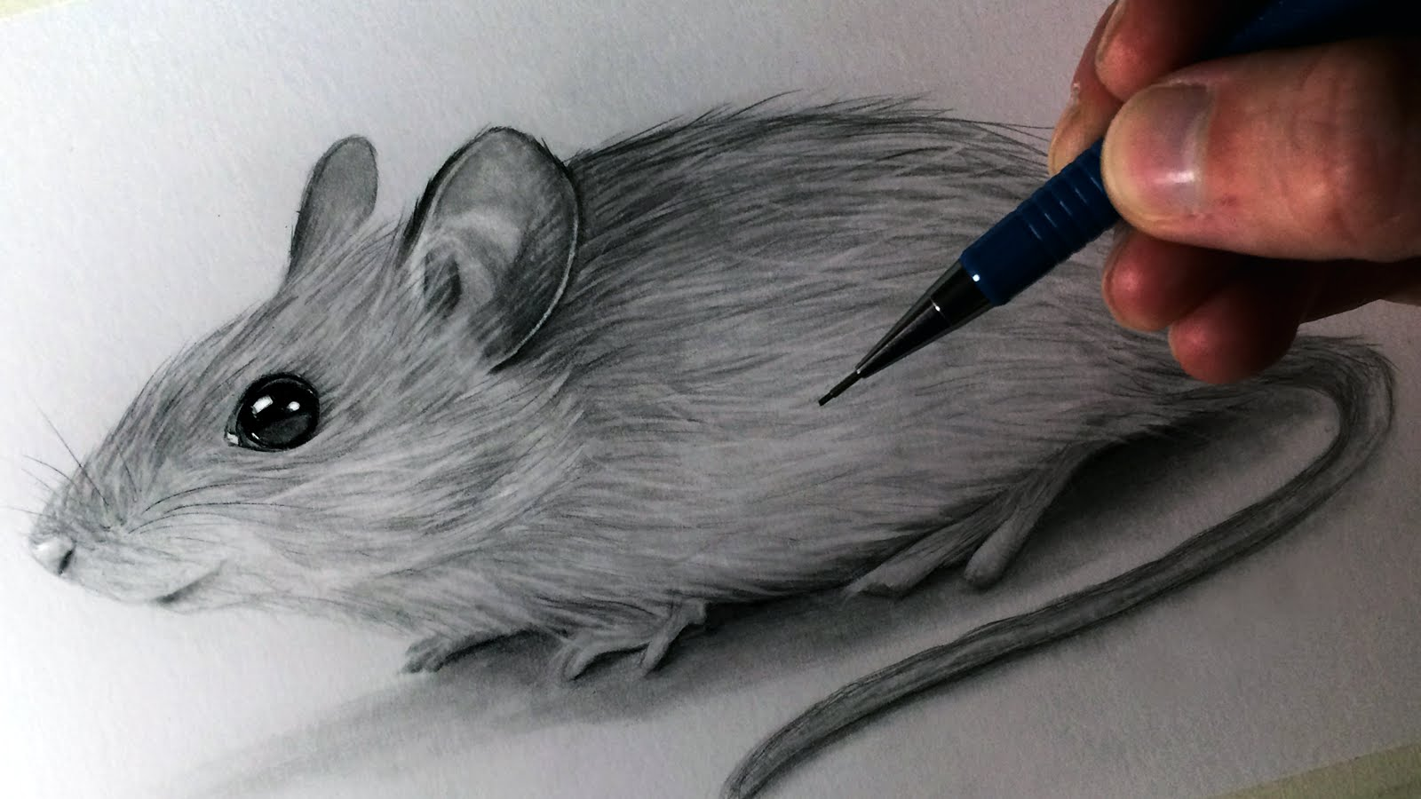 1600x900 How To Draw A Mouse