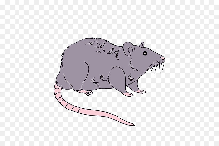 900x600 Rodent Mouse Drawing Brown Rat Black Rat