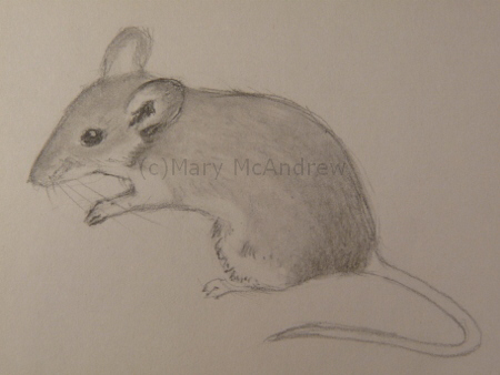 450x338 C)mouse 1 Sketches (6) Nikolas Mice And Sketches