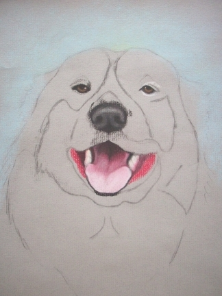 324x432 A Few Words About Drawing Rocky For Wordless Wednesday American