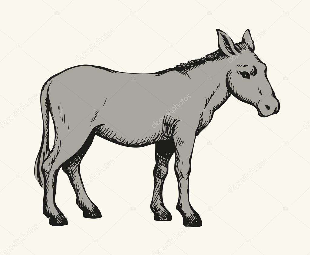 1024x843 Donkey. Vector Drawing Stock Vector Marinka