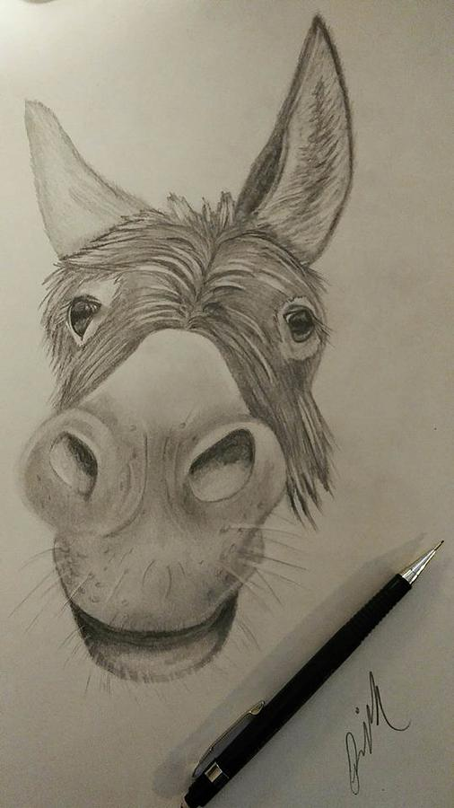 506x900 Mule Face Drawing By Rebecca Mcvaigh
