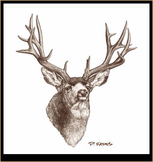 524x554 Peter Eades Original Wildlife Images