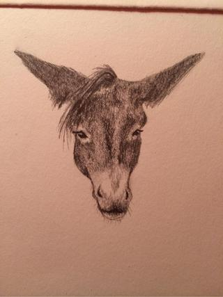 320x427 Mules Drawings On Paigeeworld. Pictures Of Mules