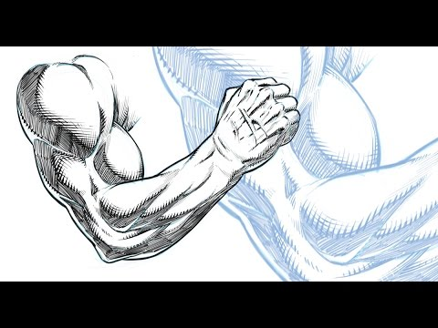 Muscle Arm Drawing at GetDrawings.com | Free for personal use Muscle ...