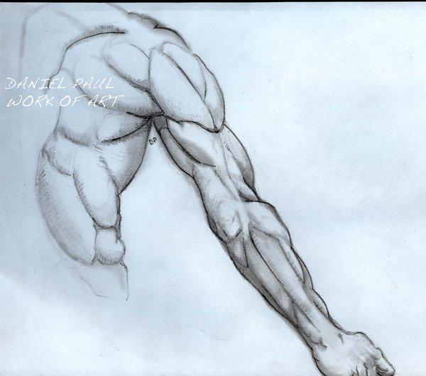 600x530 Arm Muscles By Dandanmuffinman