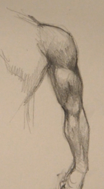 400x727 Draw Arm Muscles Back View
