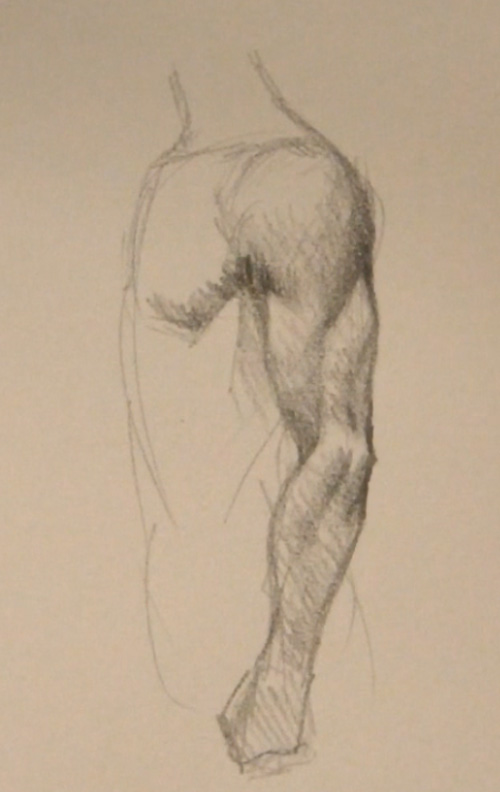 500x792 Draw Arm Muscles Side View
