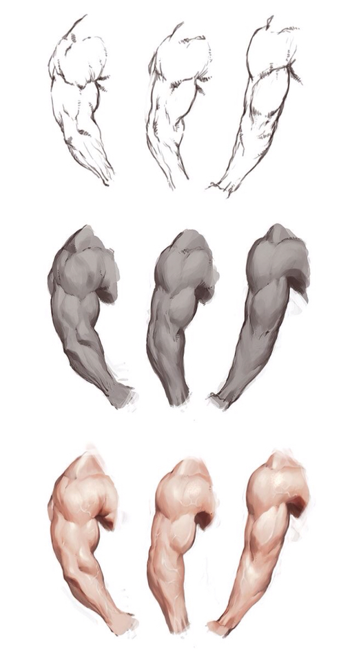 524x960 Muscles How To Draw . Muscles, Anatomy And Draw