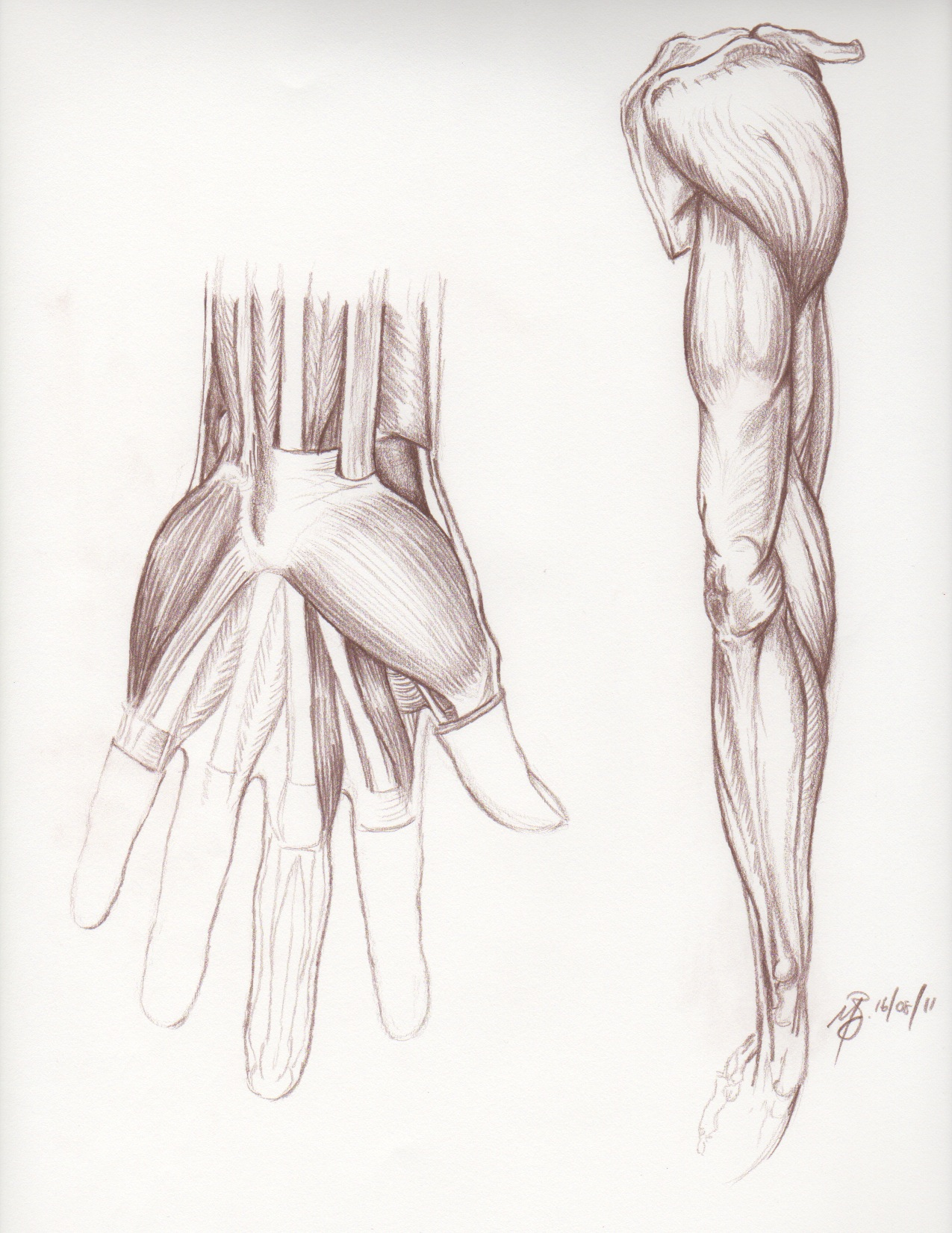 Muscle Arms Drawing at GetDrawings.com | Free for personal use ...