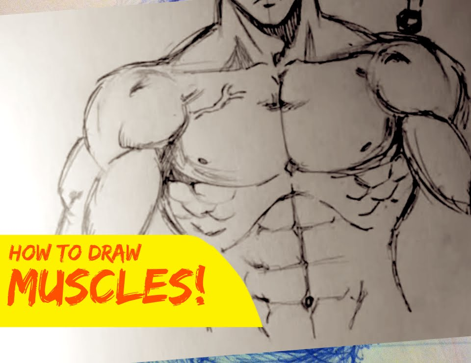 960x741 Drawing Male Body Muscles [Stylized Front]