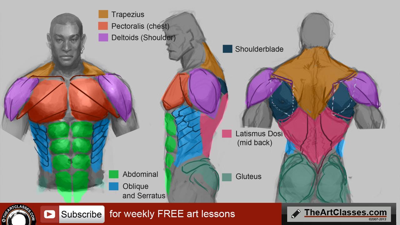 1280x720 How To Draw Man Muscles Body Anatomy