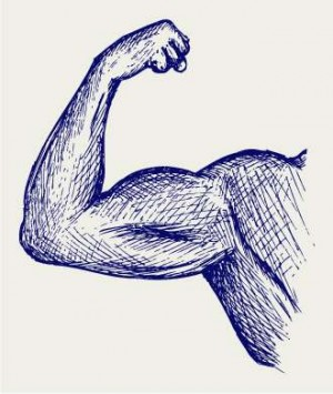 300x355 How to Draw Muscles A Brief Overview