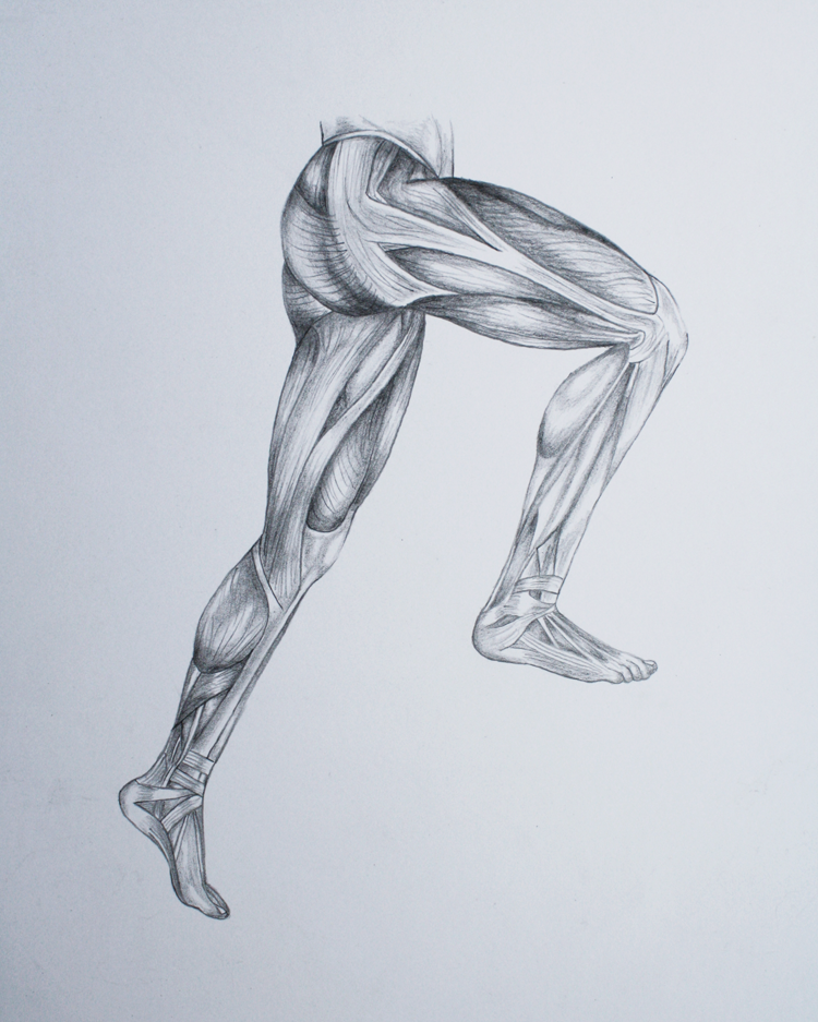 750x937 Megan McDonald – Leg Muscle Drawings