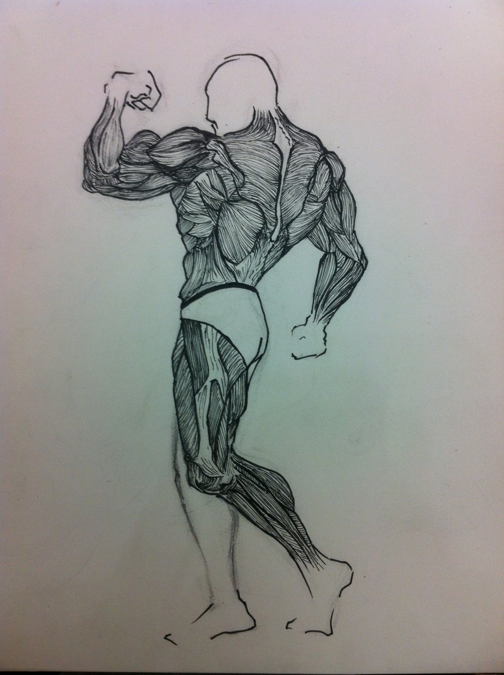 1024x1371 Muscle Drawing WIP by seenachum123 on DeviantArt