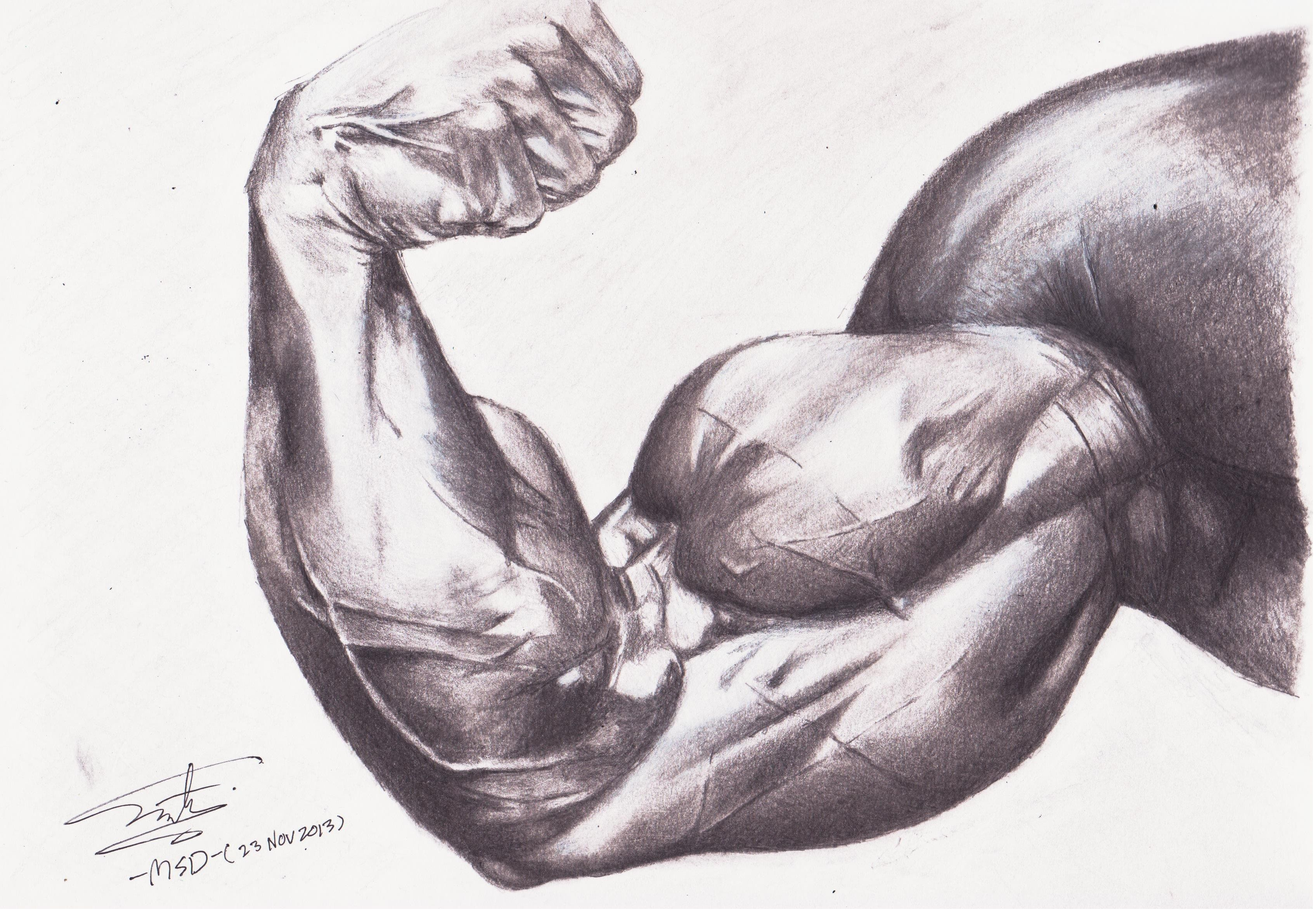 3392x2352 muscle drawing