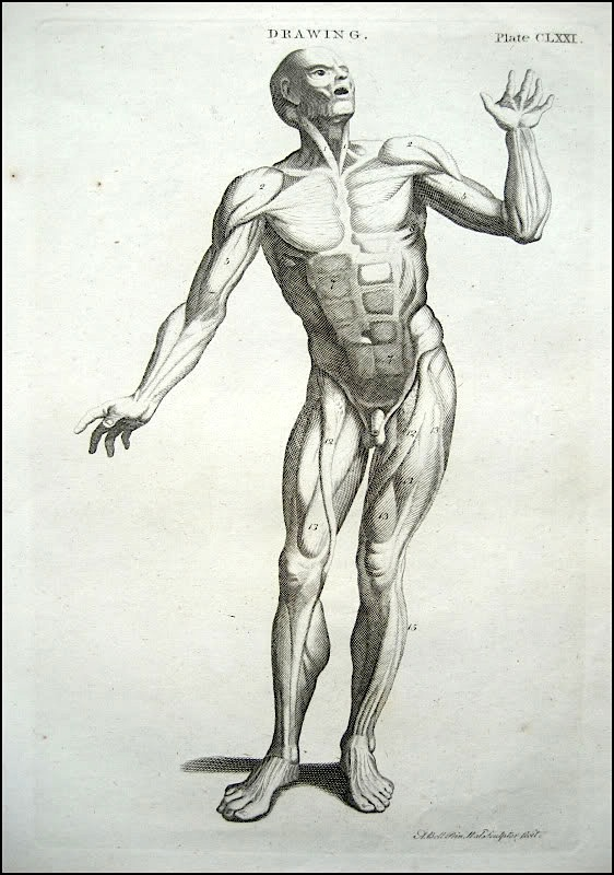 562x800 Figure Drawing How To Draw The Muscles Of The Human Body