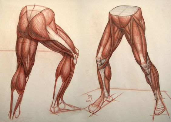 Muscular Legs Drawing at GetDrawings.com | Free for personal use ...