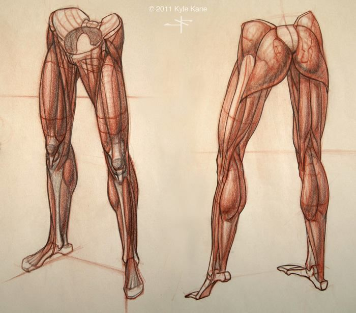 Muscular Legs Drawing at GetDrawings.com   Free for personal use ...