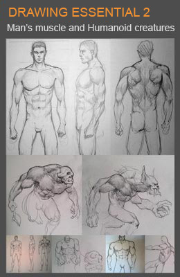 260x400 How To Draw Man's Body And Anatomy With Pencil