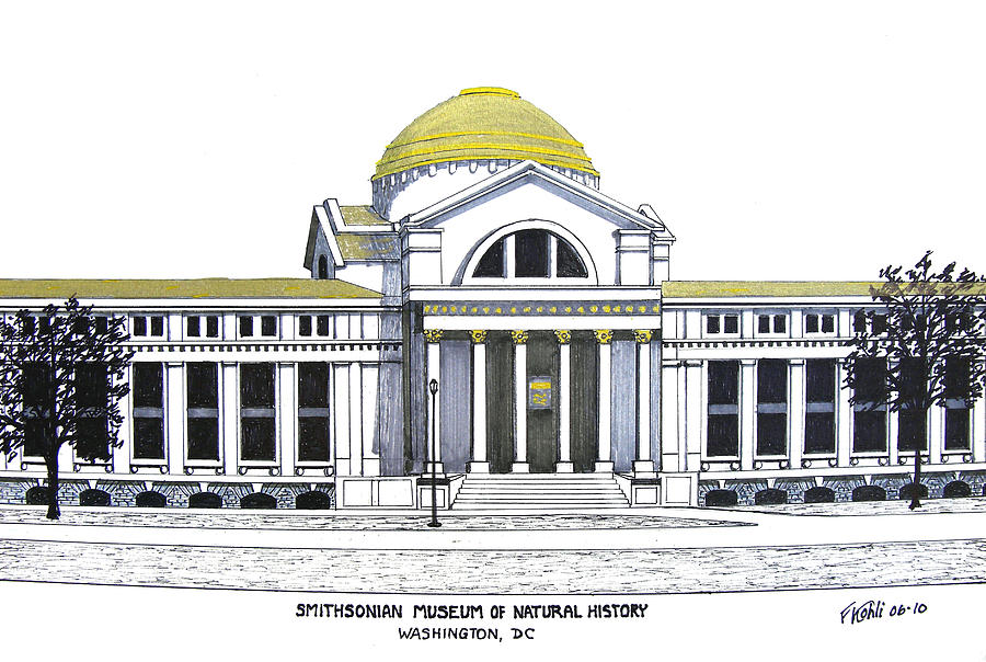 900x604 Smithsonian Museum Of Natural History Drawing By Frederic Kohli