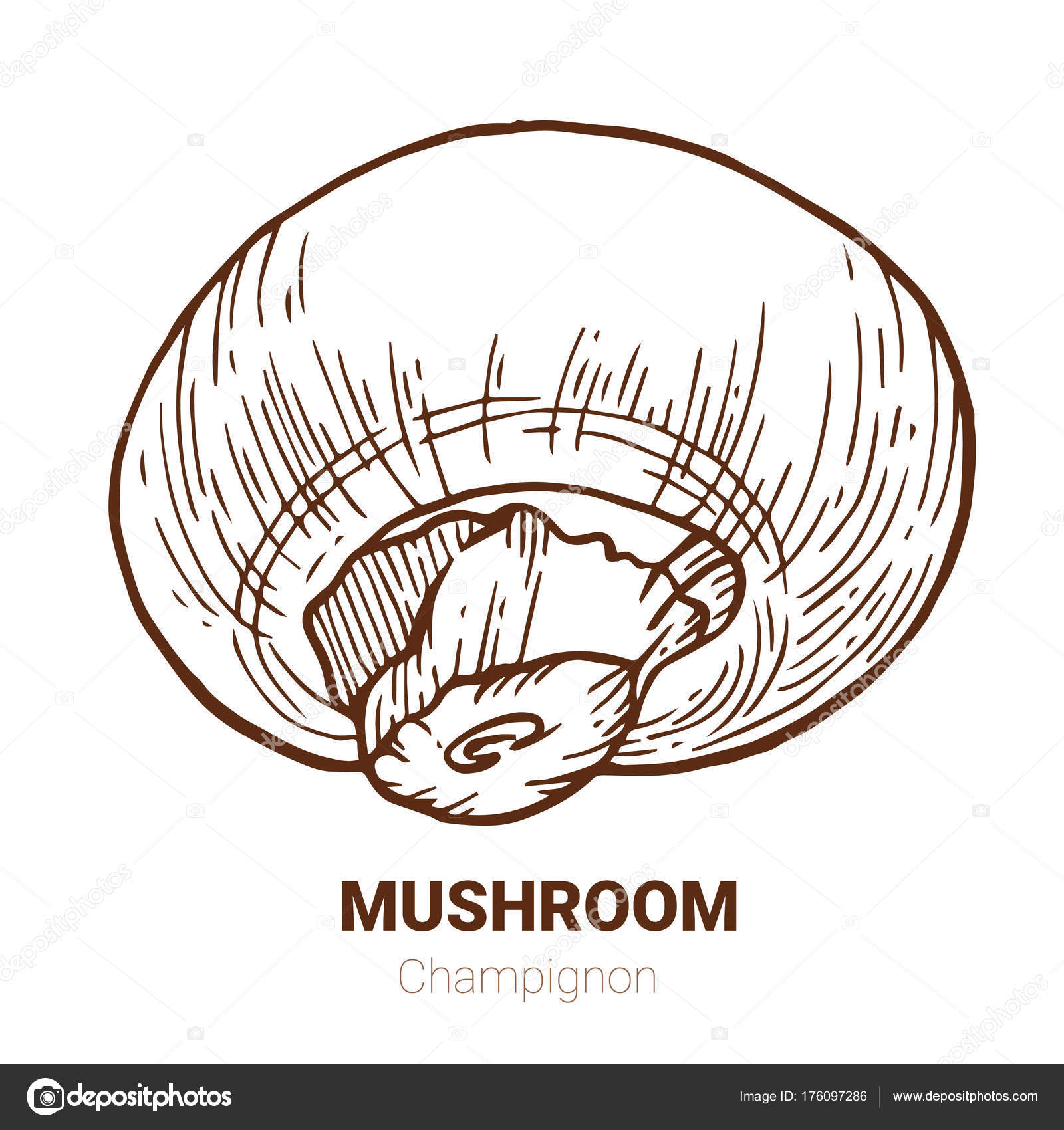 1600x1700 Champignon Hand Drawn Vector Illustration. Sketch Mushroom Draw