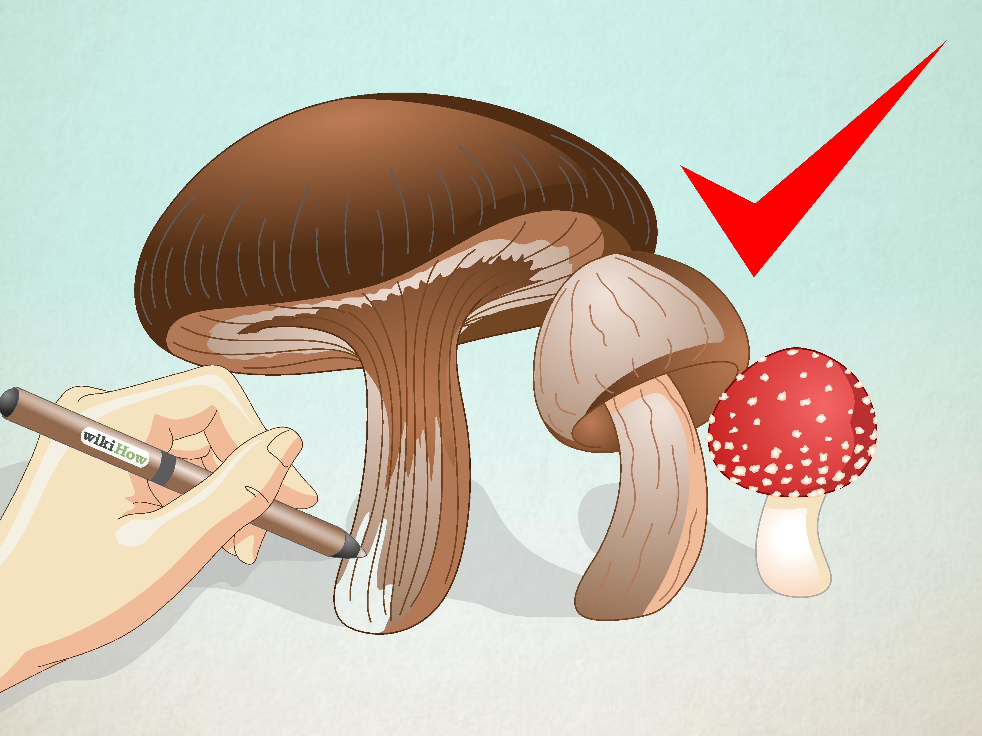 3200x2400 How To Draw Mushrooms 6 Steps (With Pictures)