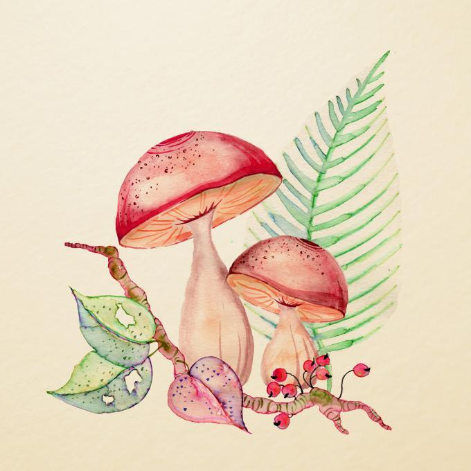 680x680 Mushrooms. Nature. Drawings. Pictures. Drawings Ideas For Kids