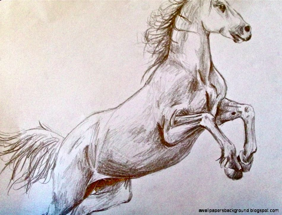 950x726 Wild Horses Drawing Wallpapers Background