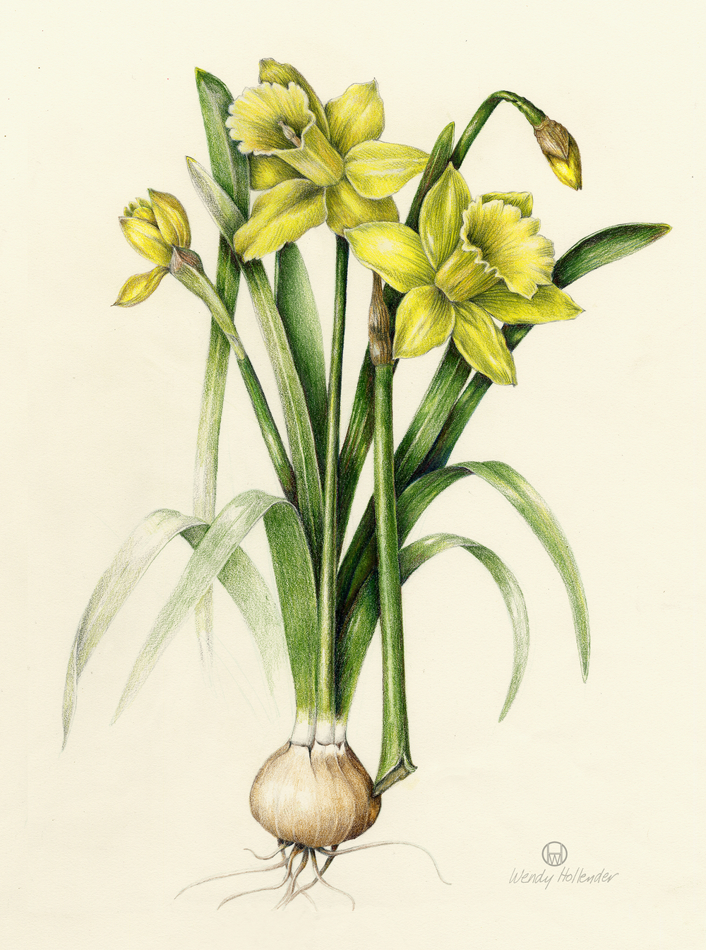 1000x1345 Flowers Botanical Artist Amp Illustrator, Learn To Draw Art Books