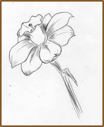 203x248 Image Result For Narcissus Drawing For My Arm Tattoo
