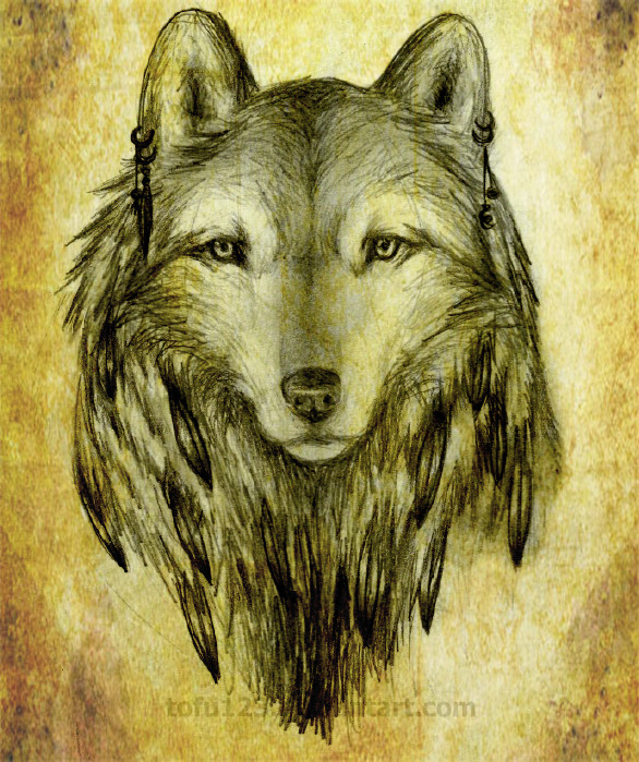 586x699 Native American Wolf By Tofu123