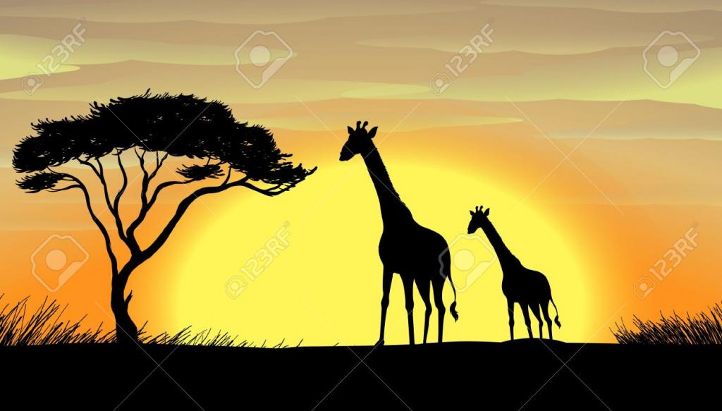1024x583 Drawing Beautiful Natural Pic Illustration Of Giraffe In