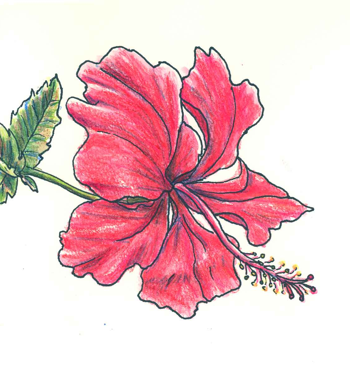 1116x1200 Beautiful Flowers Pencil Drawing Pencil Colors For Kids Nice