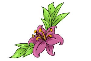 300x200 How To Draw A Beautiful Flower
