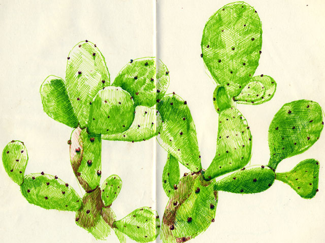 640x480 Cactus Mvp