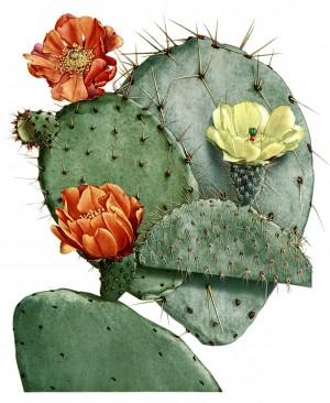 300x366 Nopal Illustration Ink Illustrations, Cacti
