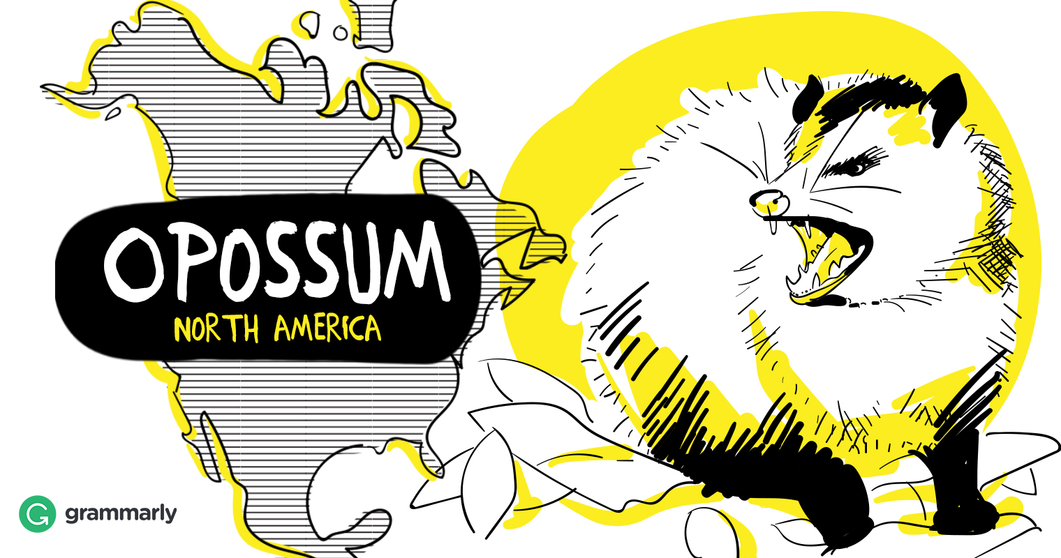 1520x800 Opossum Vs. Possum Is It The Same Animal Grammarly