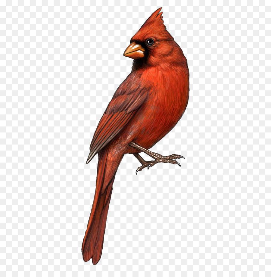 900x920 Bird St. Louis Cardinals Northern Cardinal Drawing Clip Art