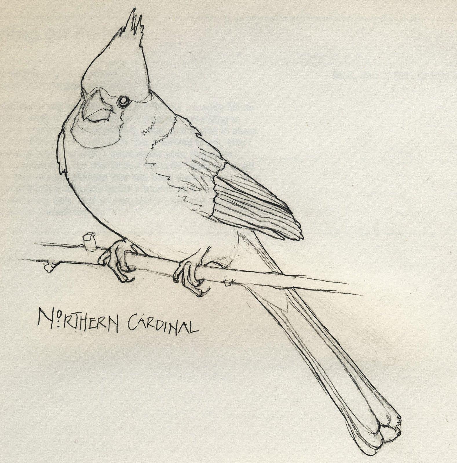1578x1600 Birdly Drawn Northern Cardinal Line Drawing