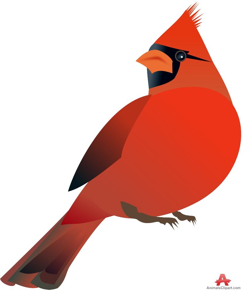 827x999 Cardinal Bird Drawing Northern Red Cardinal Bird Free Clipart