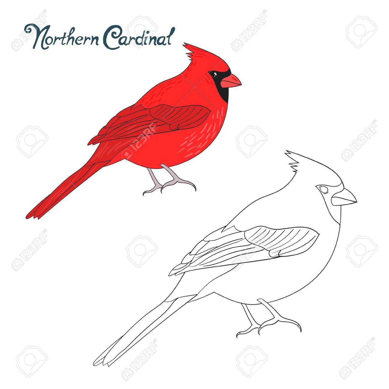 1300x1300 Educational Game Coloring Book Northern Cardinal Bird Cartoon