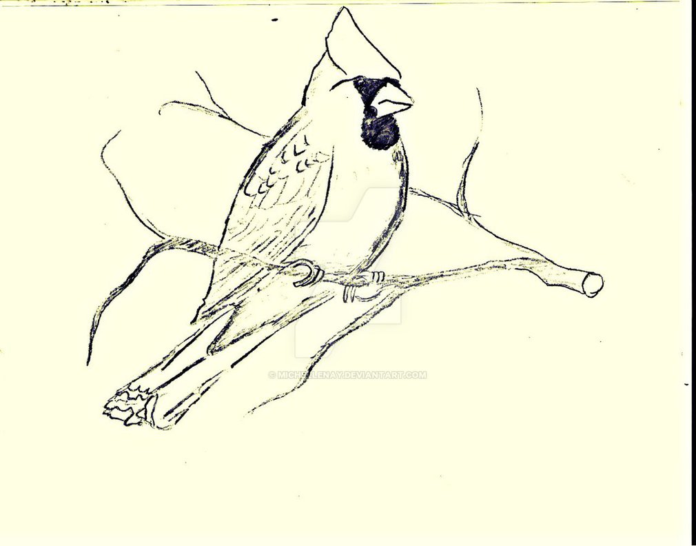 1010x792 Northern Cardinal Drawing By Michellenay