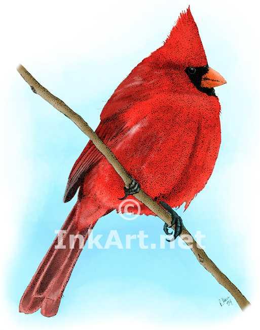 513x650 Northern Cardinal Stock Art Illustration