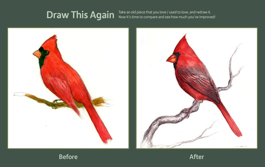 900x568 Northern Cardinal By Viperxmns