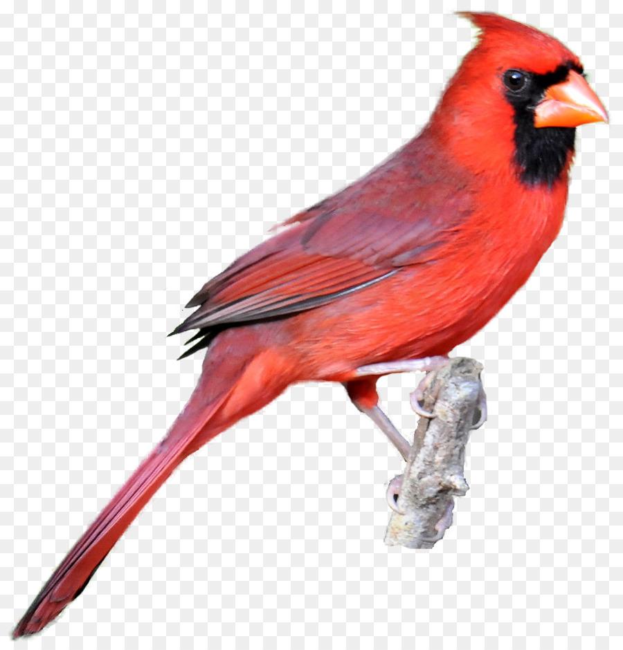900x940 Northern Cardinal Bird Drawing Clip Art
