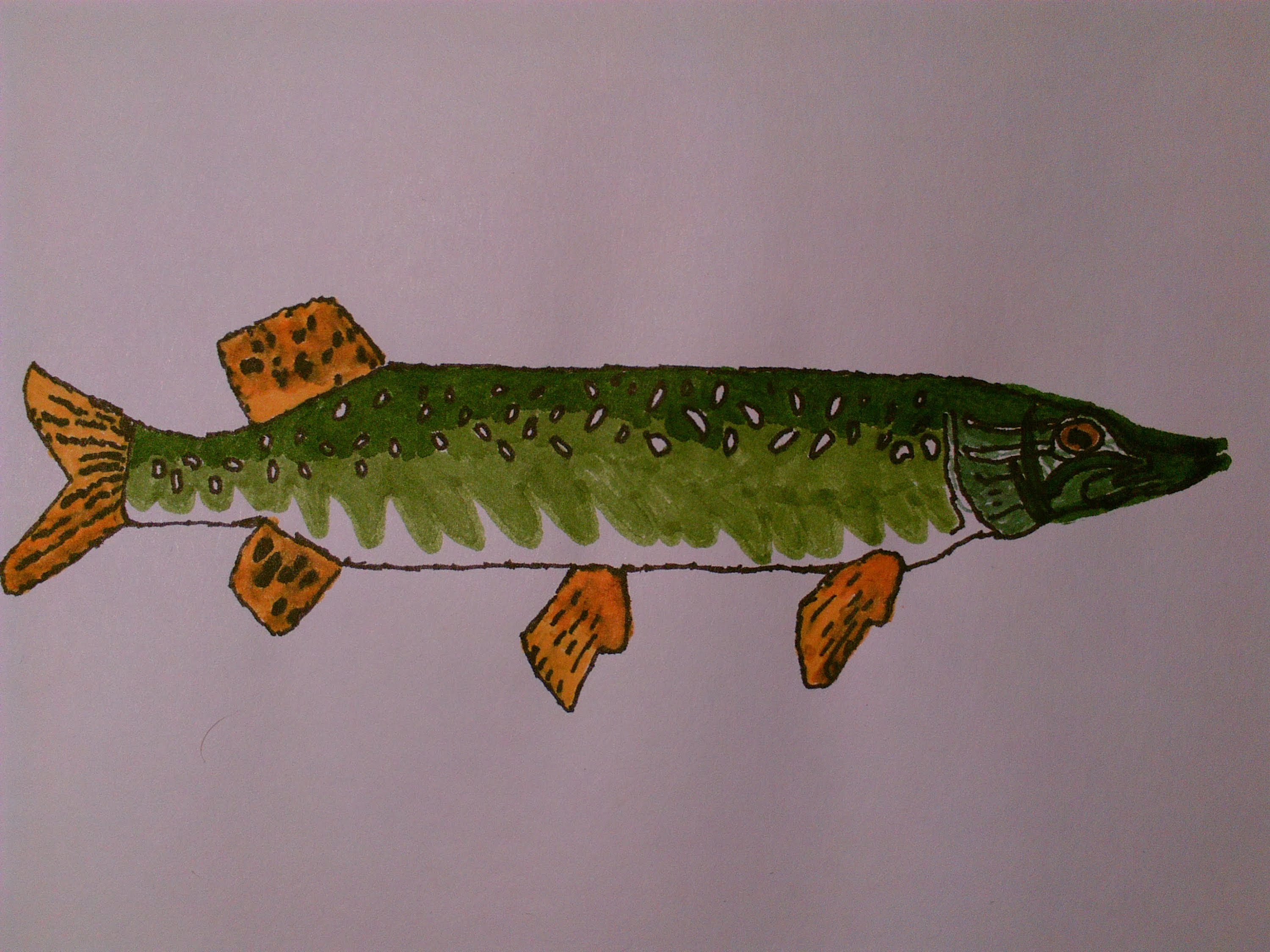 3000x2250 Northern Pike Being Drawn With Markers