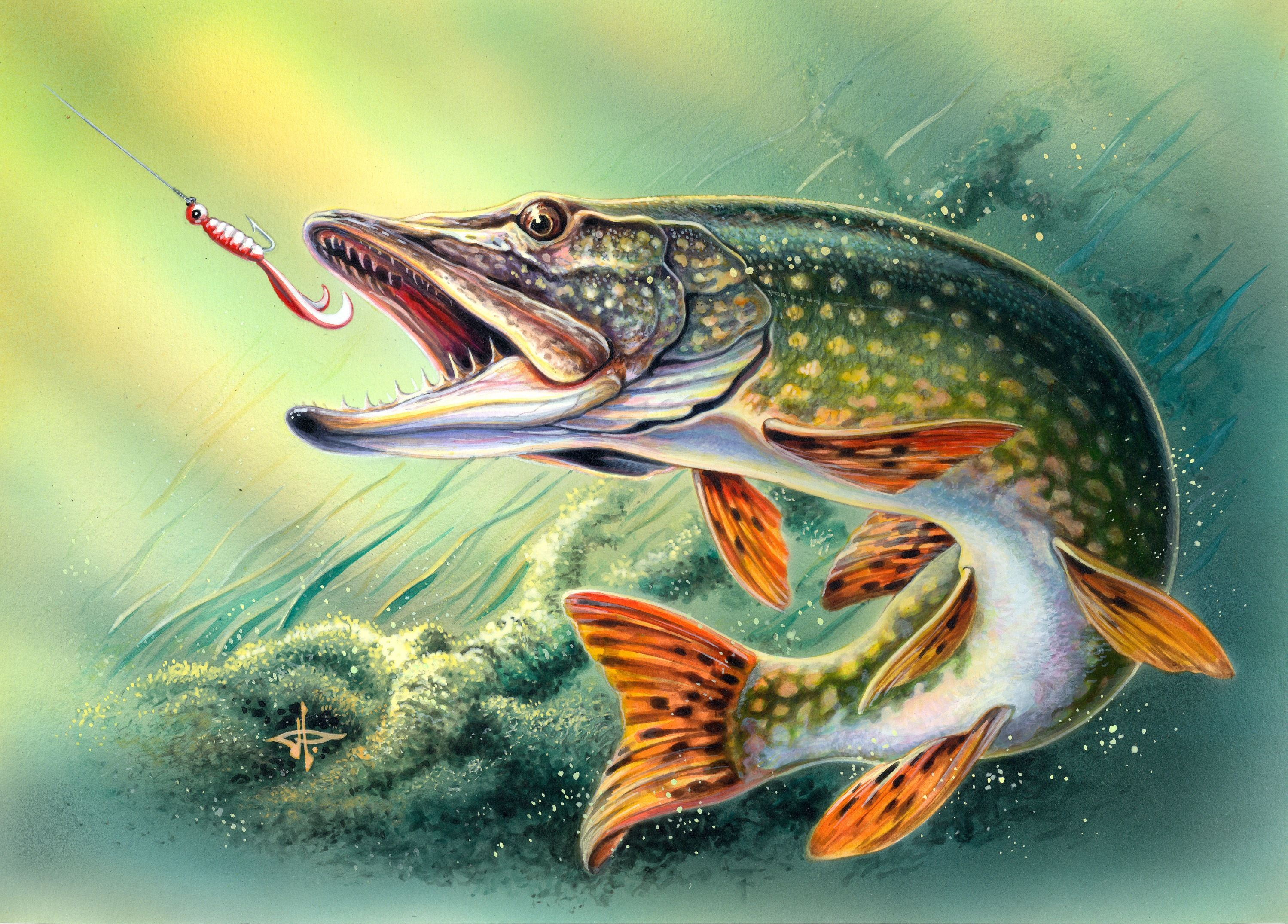 Northern Pike Drawing at GetDrawings.com | Free for personal use ...